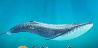 Биткоин-кит переводит большую сумму