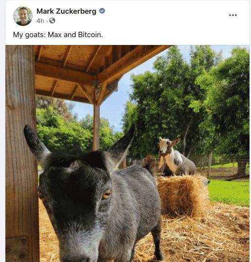 Марк Цукерберг одобрил биткоин